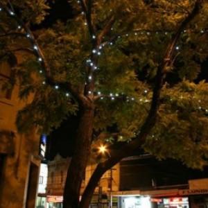 northcote bud lighting 01 399 266 95